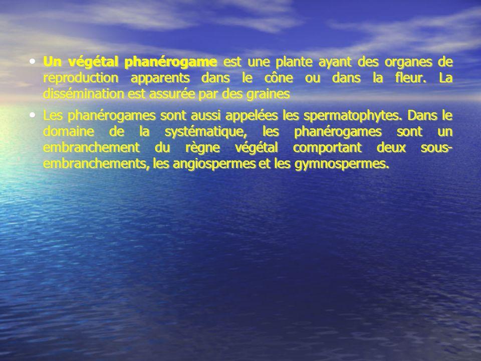 Un végétal phanérogame est une plante ayant des organes de reproduction apparents dans le cône ou dans la fleur. La dissémination est assurée par des