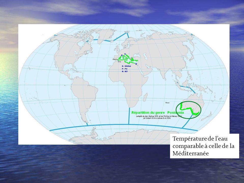 Température de leau comparable à celle de la Méditerranée