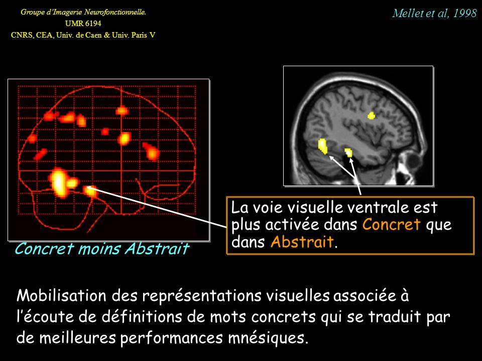 Groupe dImagerie Neurofonctionnelle. UMR 6194 CNRS, CEA, Univ. de Caen & Univ. Paris V La voie visuelle ventrale est plus activée dans Concret que dan