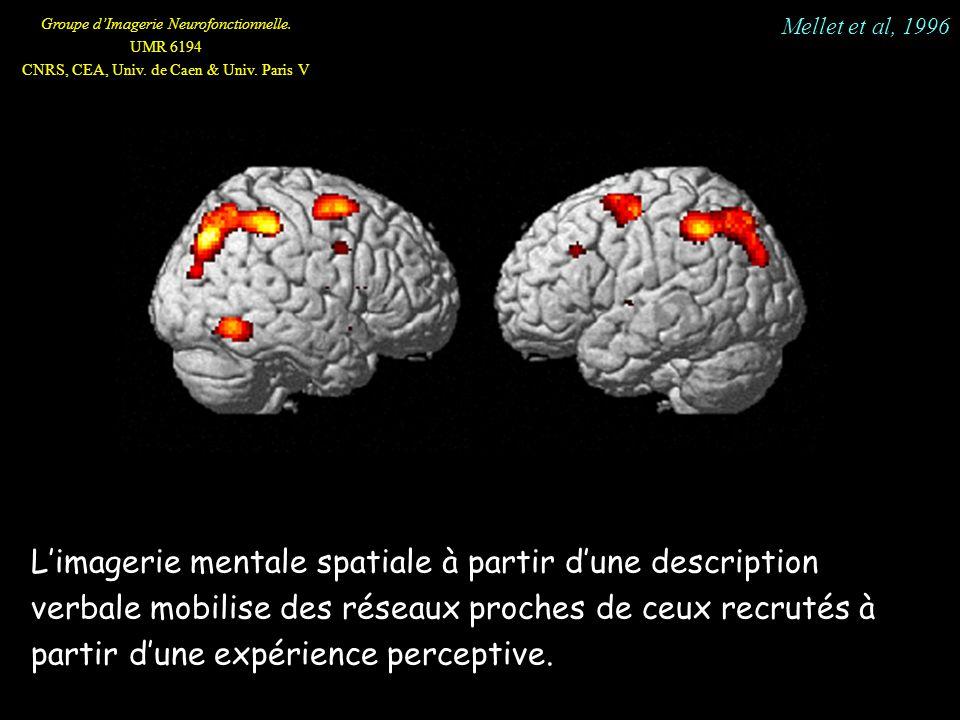 Groupe dImagerie Neurofonctionnelle. UMR 6194 CNRS, CEA, Univ. de Caen & Univ. Paris V Limagerie mentale spatiale à partir dune description verbale mo