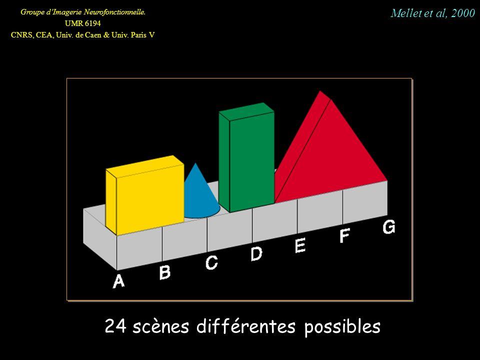Groupe dImagerie Neurofonctionnelle. UMR 6194 CNRS, CEA, Univ. de Caen & Univ. Paris V 24 scènes différentes possibles Mellet et al, 2000