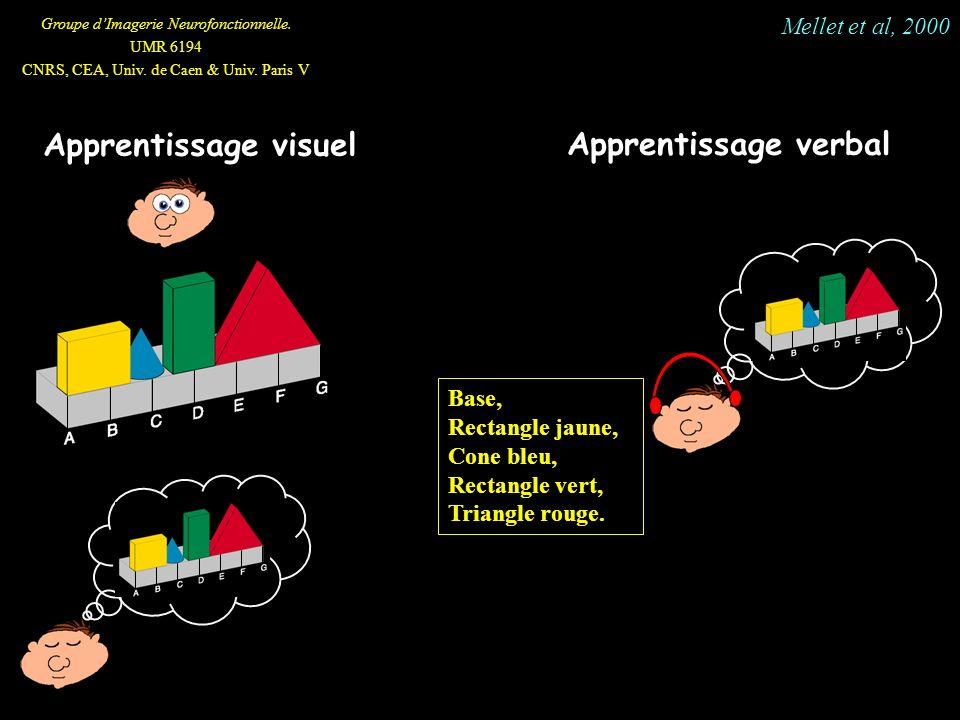 Groupe dImagerie Neurofonctionnelle. UMR 6194 CNRS, CEA, Univ. de Caen & Univ. Paris V Apprentissage visuel Apprentissage verbal Base, Rectangle jaune
