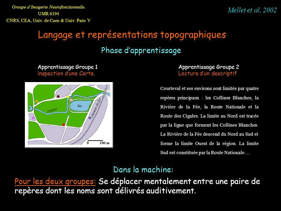Groupe dImagerie Neurofonctionnelle. UMR 6194 CNRS, CEA, Univ. de Caen & Univ. Paris V Phase dapprentissage Pour les deux groupes: Se déplacer mentale