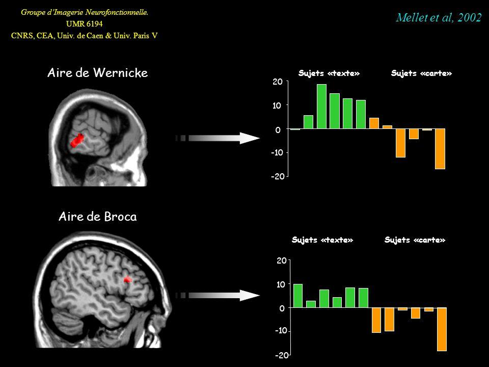 Groupe dImagerie Neurofonctionnelle. UMR 6194 CNRS, CEA, Univ. de Caen & Univ. Paris V Aire de Wernicke Aire de Broca -20 -10 0 10 20 Sujets «texte» -