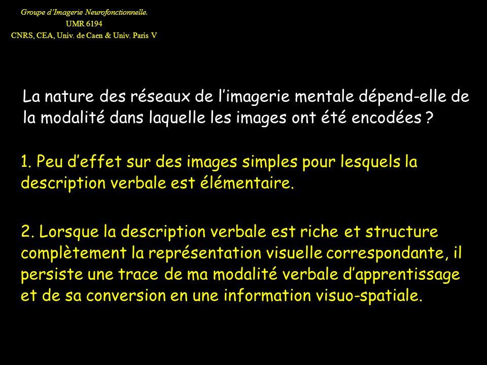 Groupe dImagerie Neurofonctionnelle. UMR 6194 CNRS, CEA, Univ. de Caen & Univ. Paris V La nature des réseaux de limagerie mentale dépend-elle de la mo