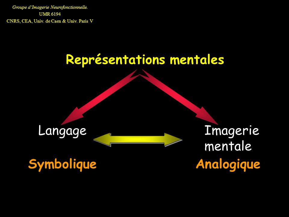 Groupe dImagerie Neurofonctionnelle. UMR 6194 CNRS, CEA, Univ. de Caen & Univ. Paris V Représentations mentales SymboliqueAnalogique Langage Imagerie