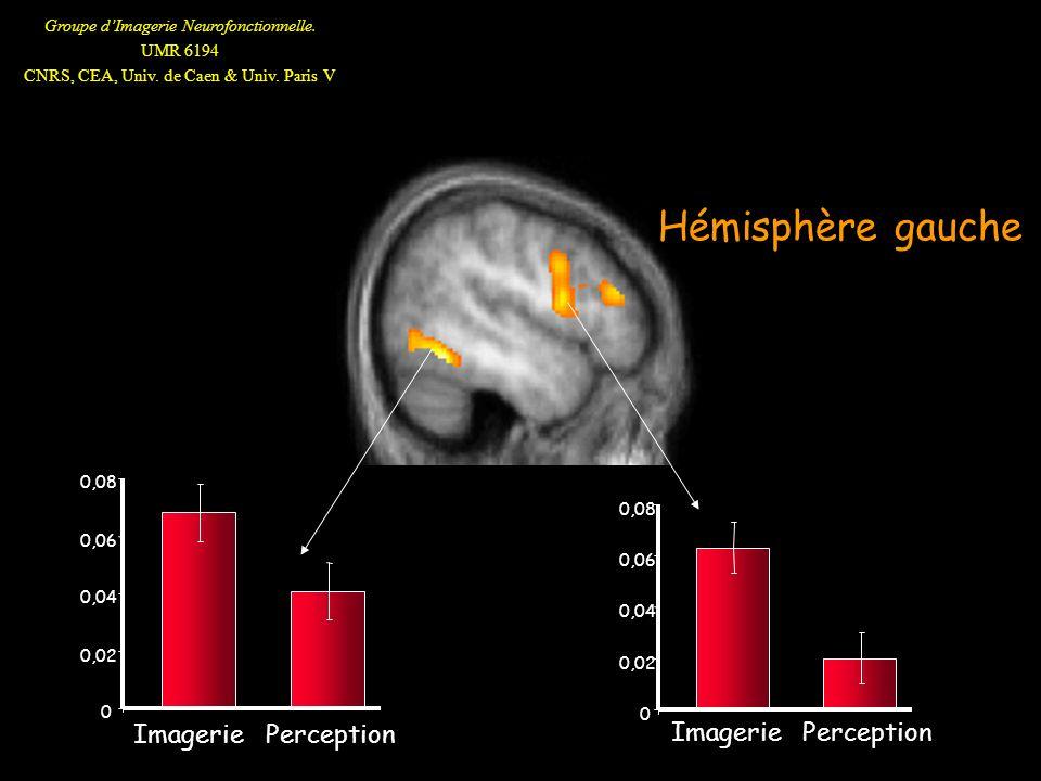 Groupe dImagerie Neurofonctionnelle. UMR 6194 CNRS, CEA, Univ. de Caen & Univ. Paris V 0 0,02 0,04 0,06 0,08 Imagerie Perception 0 0,02 0,04 0,06 0,08
