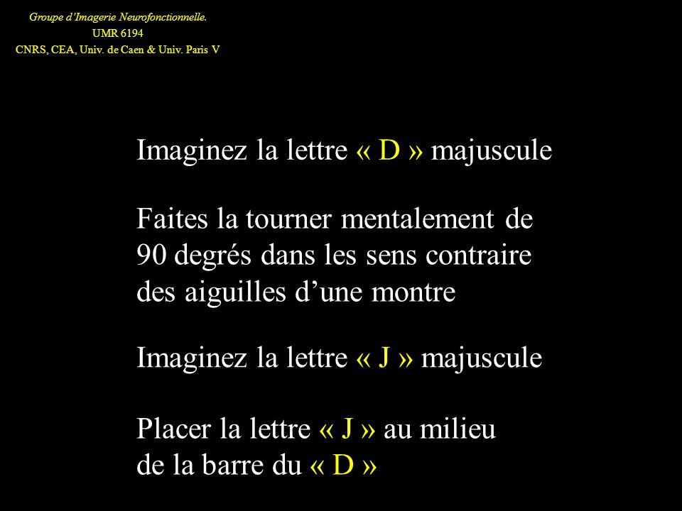Groupe dImagerie Neurofonctionnelle. UMR 6194 CNRS, CEA, Univ. de Caen & Univ. Paris V Imaginez la lettre « D » majuscule Faites la tourner mentalemen