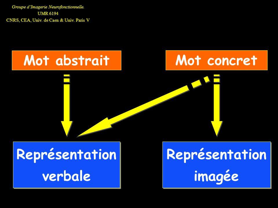 Groupe dImagerie Neurofonctionnelle. UMR 6194 CNRS, CEA, Univ. de Caen & Univ. Paris V Mot abstrait Représentation verbale Mot concret Représentation