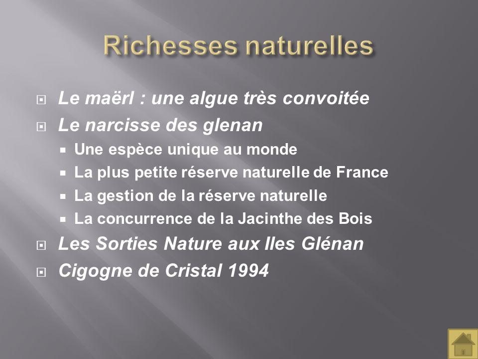 Le maërl : une algue très convoitée Le narcisse des glenan Une espèce unique au monde La plus petite réserve naturelle de France La gestion de la rése