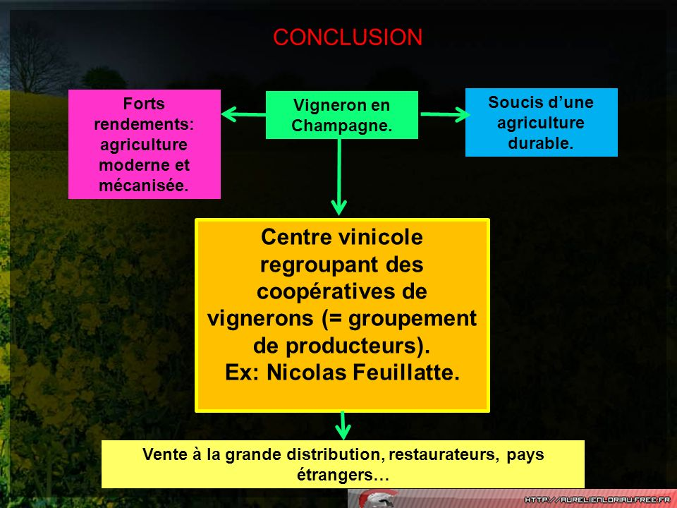 CONCLUSION Vigneron en Champagne. Forts rendements: agriculture moderne et mécanisée. Soucis dune agriculture durable. Centre vinicole regroupant des