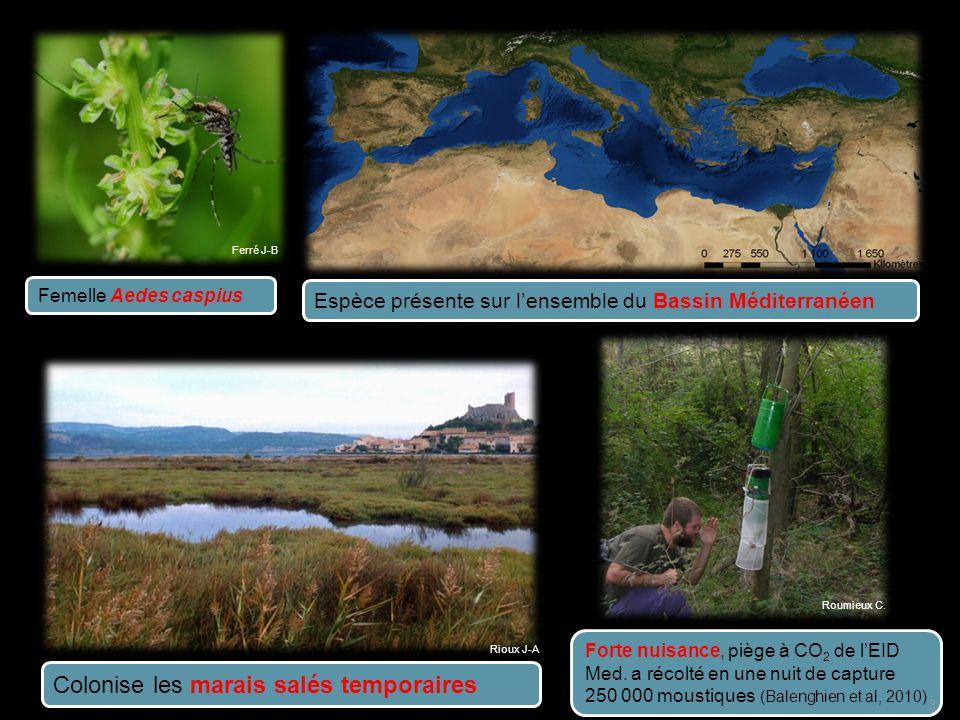 Actualisation de la cartographie des sous-étages bioclimatiques de Emberger (1955) 1) A ctualisation à haute résolution des cartes du climat méditerranéen 2) Proposition dune définition multi-auteur de lECM 3) Evolution de lECM suivant les scénarii du GIEC 34