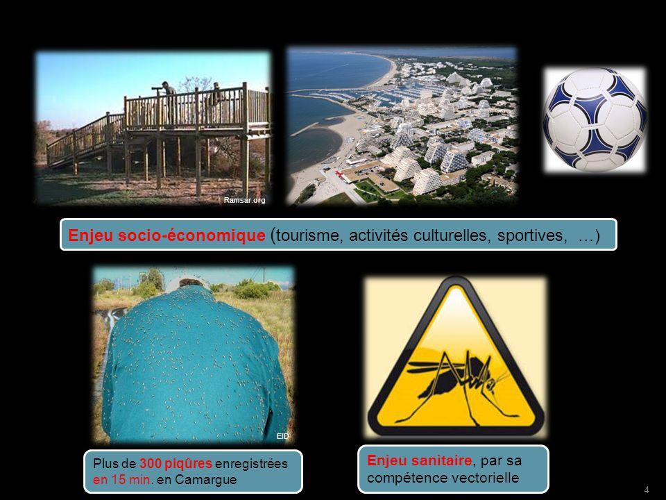 www.emc.mc Enjeu socio-économique ( tourisme, activités culturelles, sportives, …) Enjeu sanitaire, par sa compétence vectorielle Plus de 300 piqûres