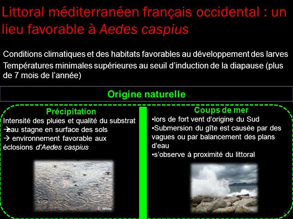 Littoral méditerranéen français occidental : un lieu favorable à Aedes caspius Conditions climatiques et des habitats favorables au développement des