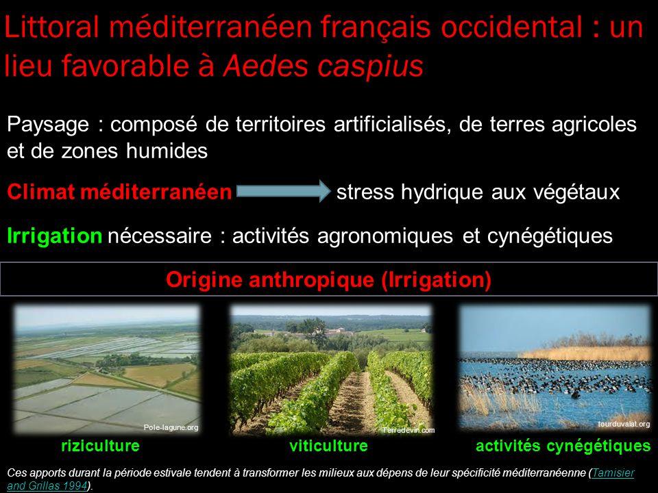 Origine anthropique (Irrigation) Paysage : composé de territoires artificialisés, de terres agricoles et de zones humides Climat méditerranéen stress