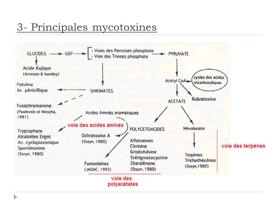 3- Principales mycotoxines Plus de 300 mycotoxines ont été identifiées: Aflatoxines: AFB1> AFM1>AFG1>AFB2>AFG2 Ochratoxine: OTA, OTB,OTC. Fumonisines: