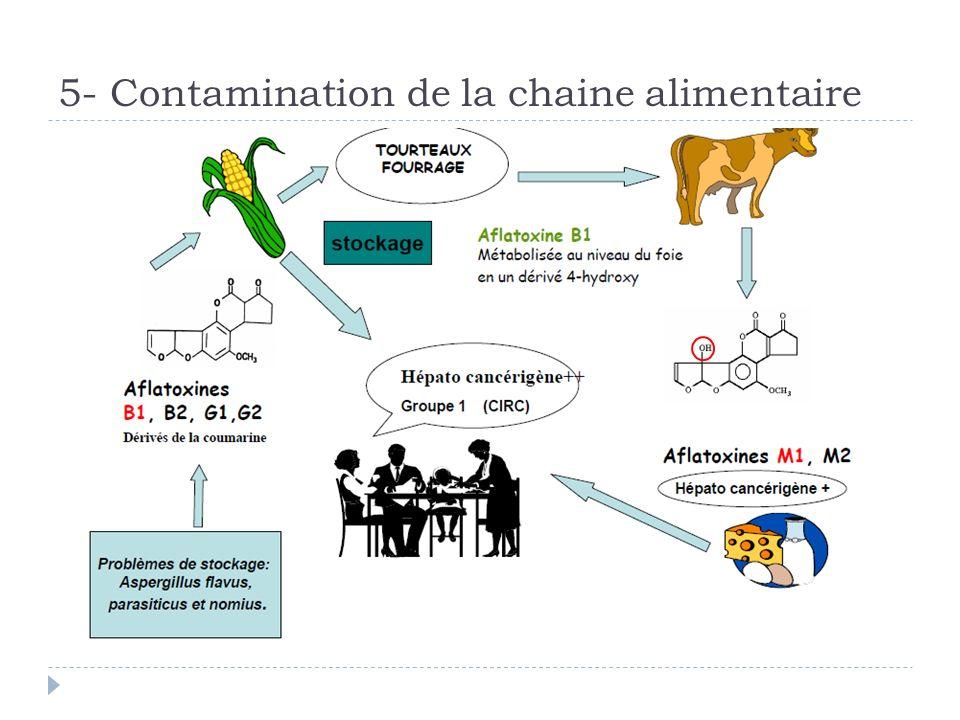 5- Contamination de la chaine alimentaire