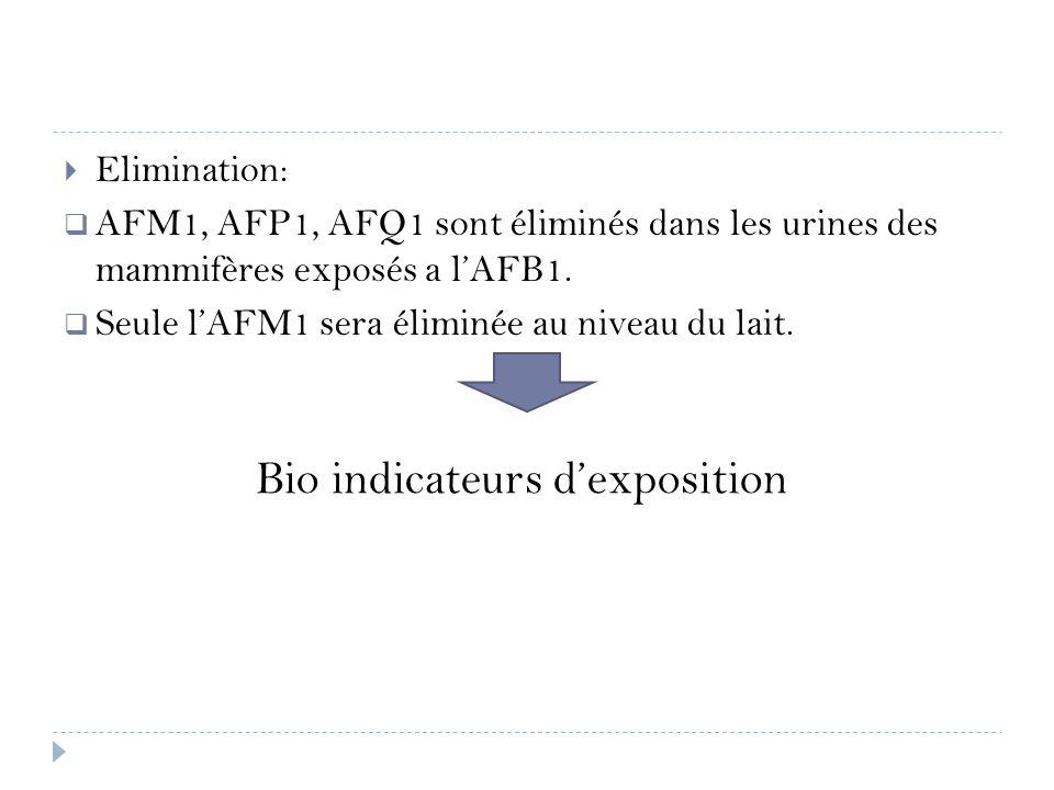 Elimination: AFM1, AFP1, AFQ1 sont éliminés dans les urines des mammifères exposés a lAFB1. Seule lAFM1 sera éliminée au niveau du lait. Bio indicateu