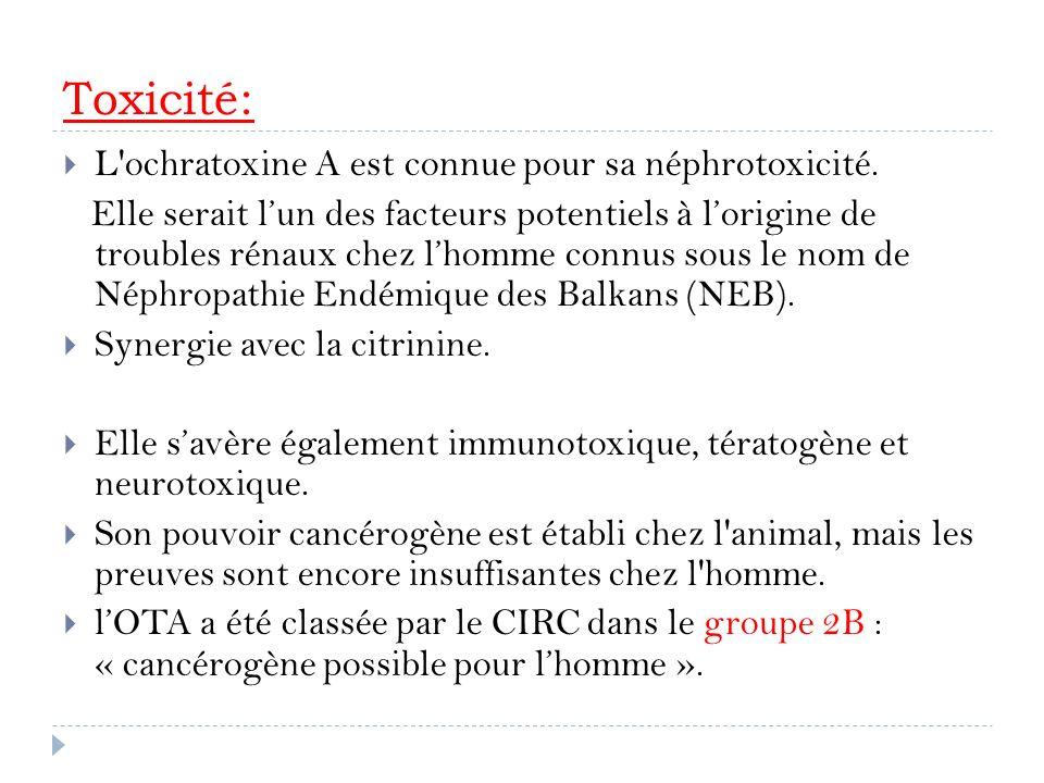 Toxicité: L'ochratoxine A est connue pour sa néphrotoxicité. Elle serait lun des facteurs potentiels à lorigine de troubles rénaux chez lhomme connus