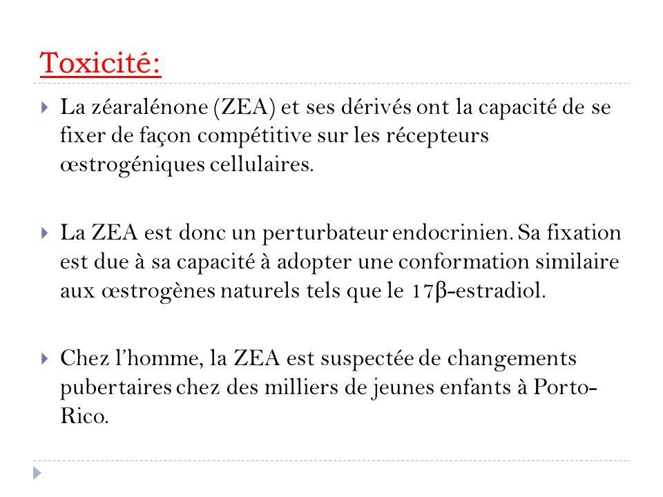 Toxicité: La zéaralénone (ZEA) et ses dérivés ont la capacité de se fixer de façon compétitive sur les récepteurs œstrogéniques cellulaires. La ZEA es