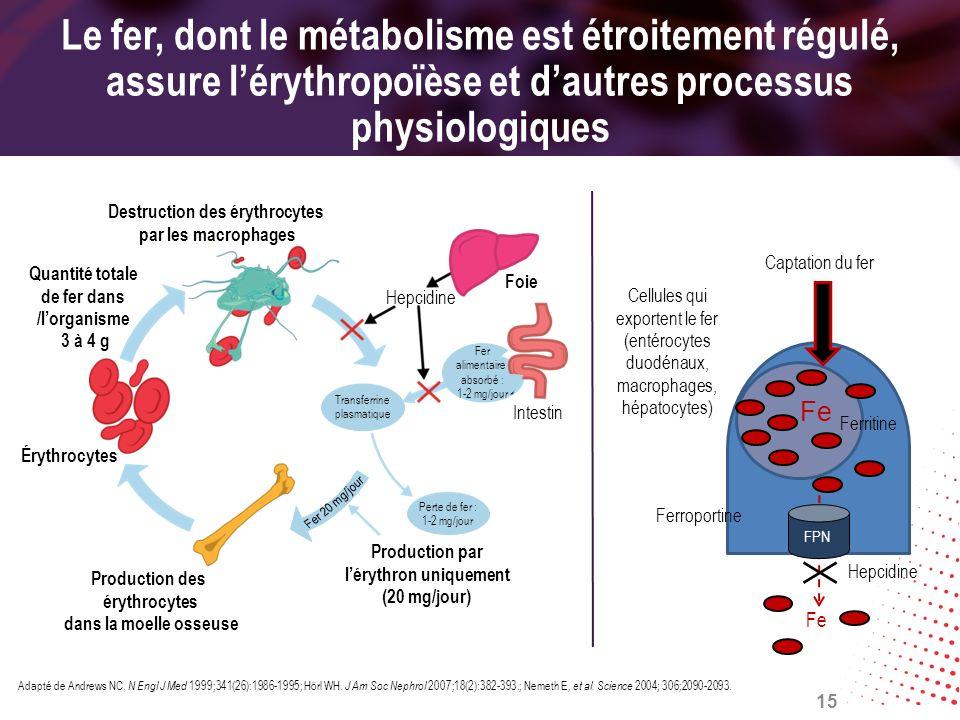 Le fer, dont le métabolisme est étroitement régulé, assure lérythropoïèse et dautres processus physiologiques Adapté de Andrews NC. N Engl J Med 1999;
