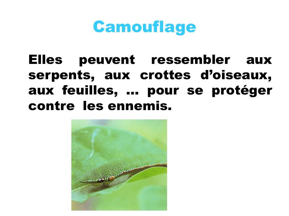 Camouflage Elles peuvent ressembler aux serpents, aux crottes doiseaux, aux feuilles, … pour se protéger contre les ennemis.