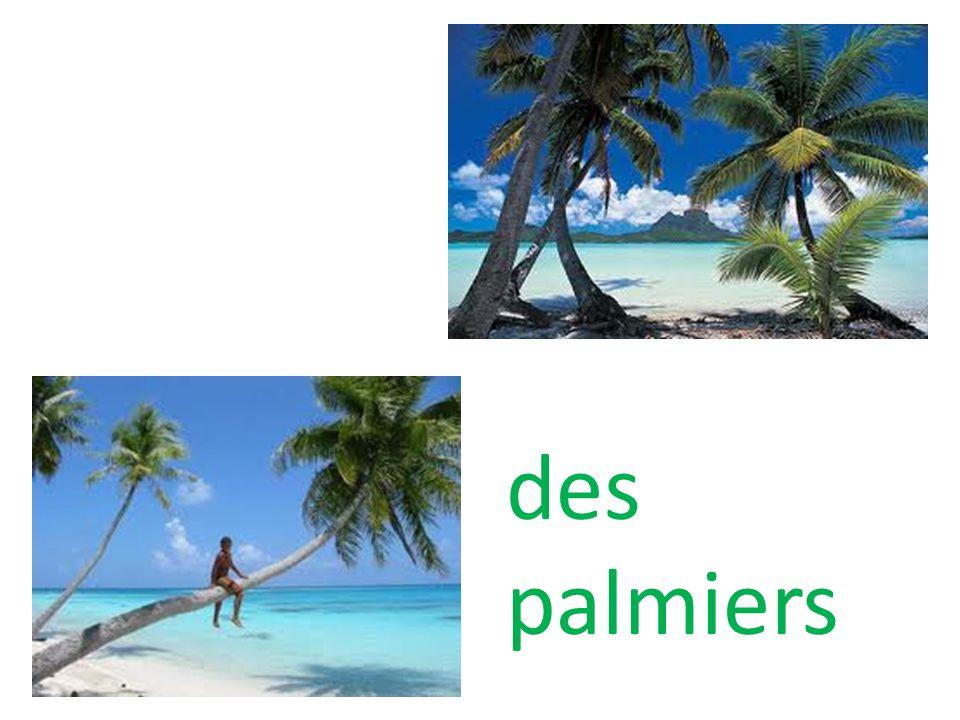 des palmiers