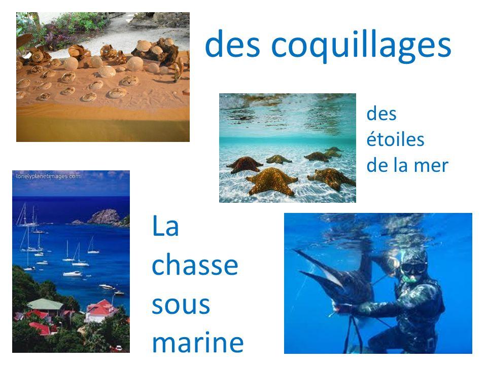 des coquillages La chasse sous marine des étoiles de la mer
