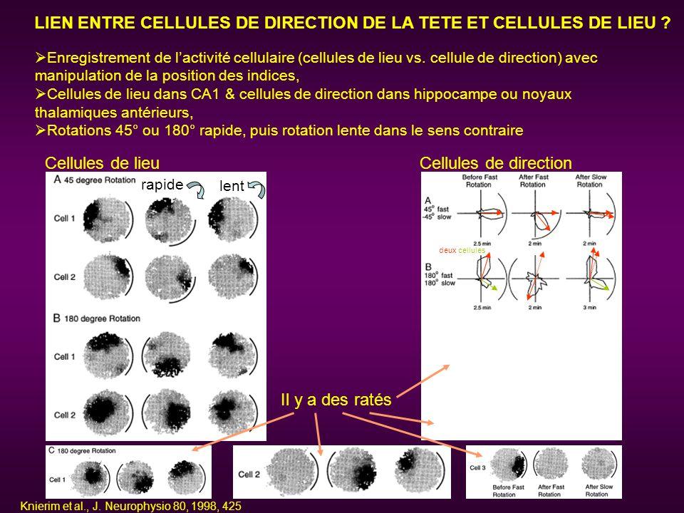 LIEN ENTRE CELLULES DE DIRECTION DE LA TETE ET CELLULES DE LIEU ? Enregistrement de lactivité cellulaire (cellules de lieu vs. cellule de direction) a