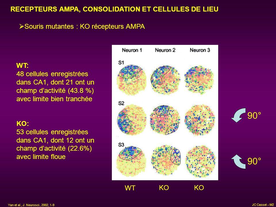 RECEPTEURS AMPA, CONSOLIDATION ET CELLULES DE LIEU Souris mutantes : KO récepteurs AMPA WT KO 90° WT: 48 cellules enregistrées dans CA1, dont 21 ont u