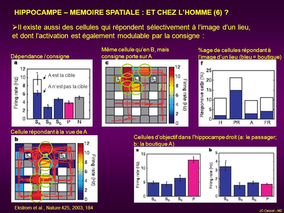 HIPPOCAMPE – MEMOIRE SPATIALE : ET CHEZ LHOMME (6) ? Il existe aussi des cellules qui répondent sélectivement à limage dun lieu, et dont lactivation e