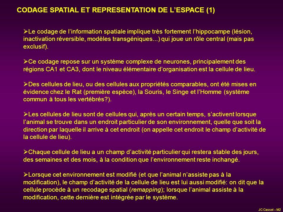 Le codage de linformation spatiale implique très fortement lhippocampe (lésion, inactivation réversible, modèles transgéniques...) qui joue un rôle ce