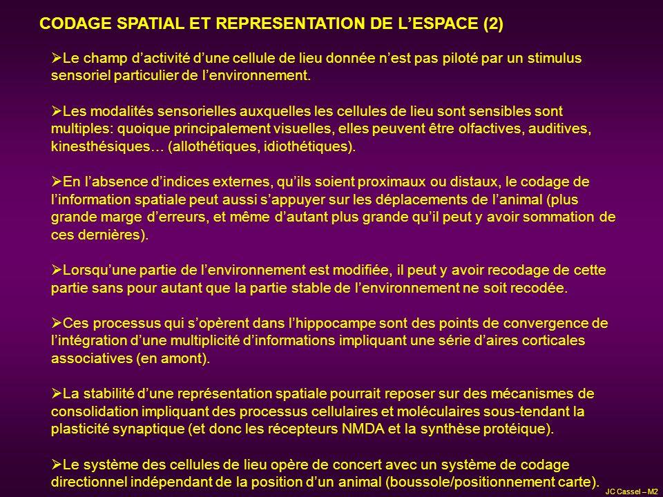CODAGE SPATIAL ET REPRESENTATION DE LESPACE (2) Le champ dactivité dune cellule de lieu donnée nest pas piloté par un stimulus sensoriel particulier d