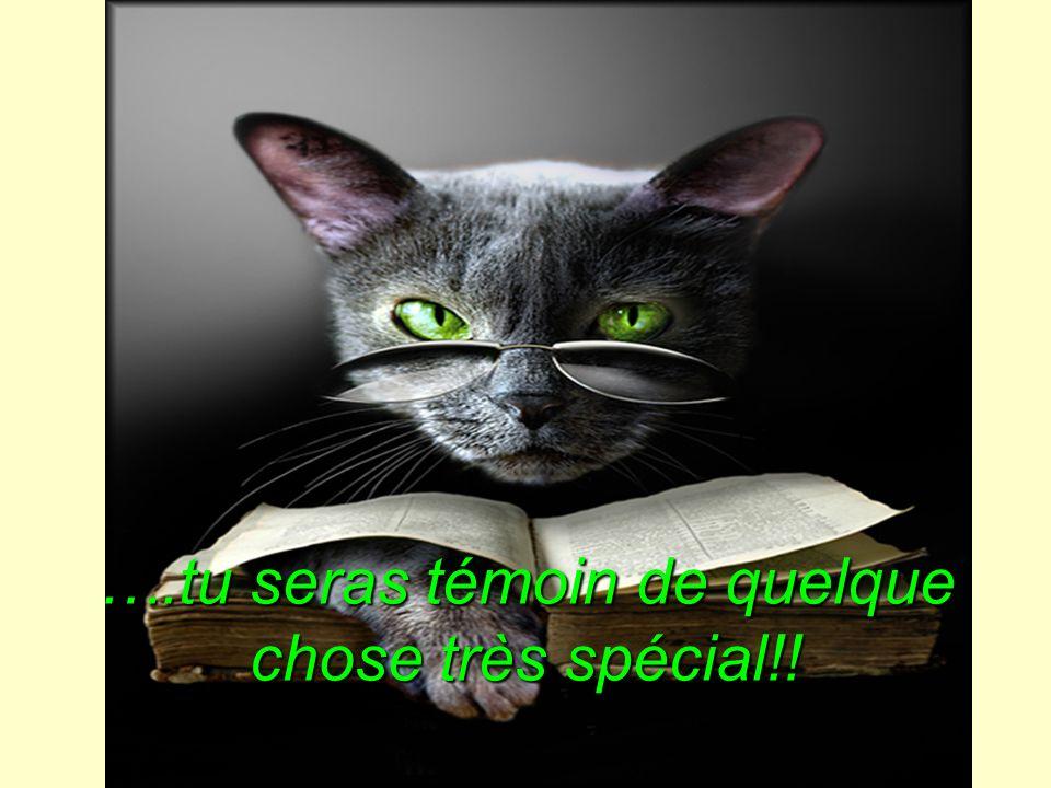 ….tu seras témoin de quelque chose très spécial!!