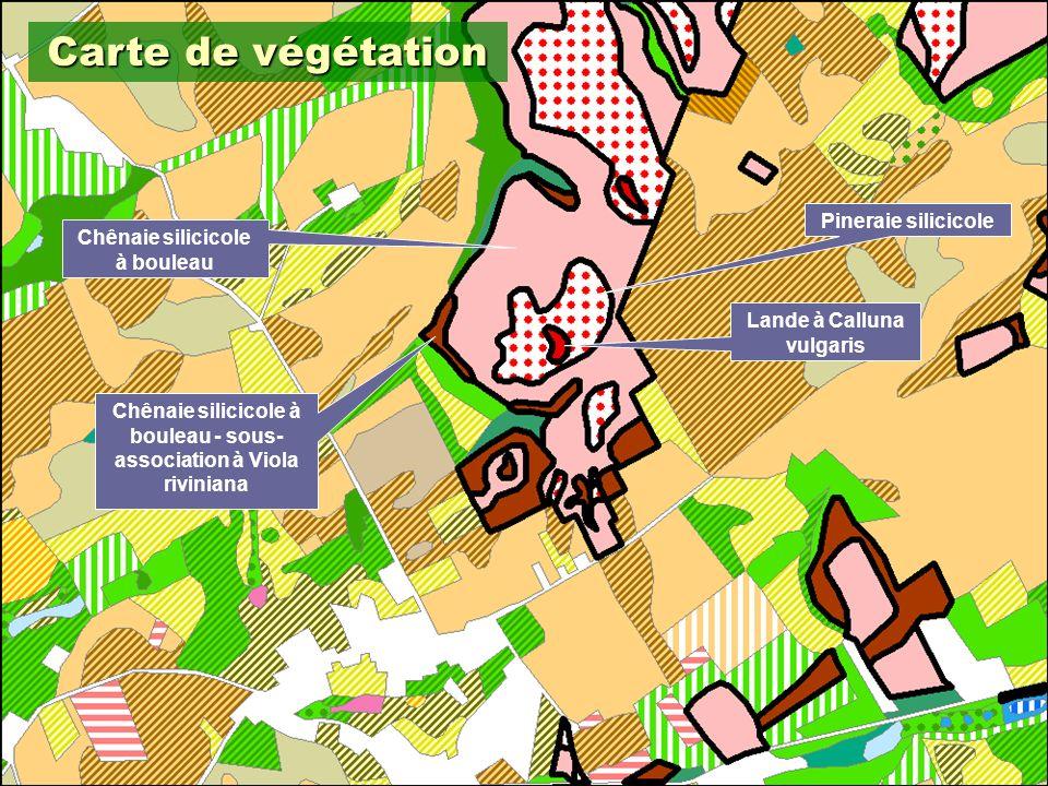 13 Carte de végétation Lande à Calluna vulgaris Pineraie silicicole Chênaie silicicole à bouleau Chênaie silicicole à bouleau - sous- association à Viola riviniana