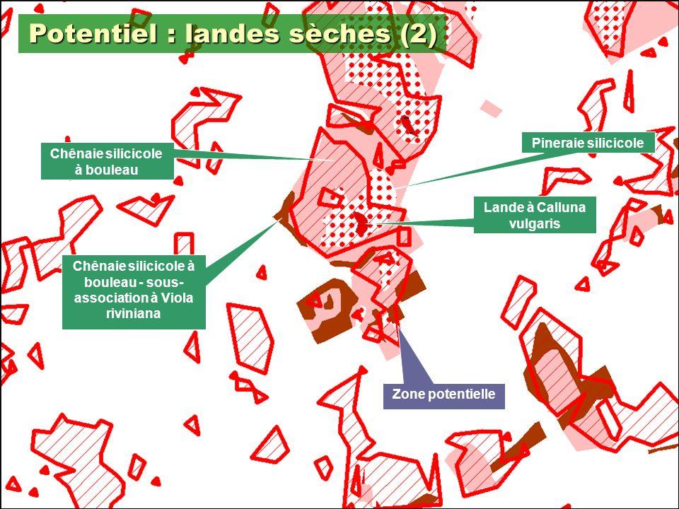 16 Potentiel : landes sèches (2) Zone potentielle Lande à Calluna vulgaris Pineraie silicicole Chênaie silicicole à bouleau Chênaie silicicole à bouleau - sous- association à Viola riviniana
