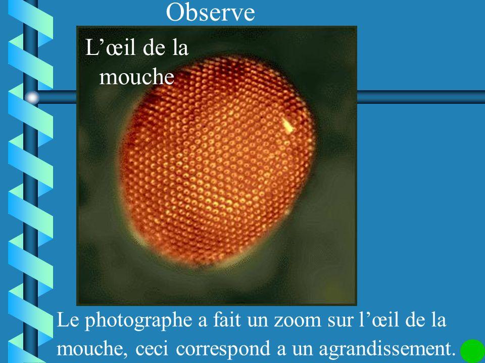 Si on divise toutes les dimensions par 1 600, on dit que léchelle de la maquette est Cest une réduction, léchelle est un nombre plus petit que 1.
