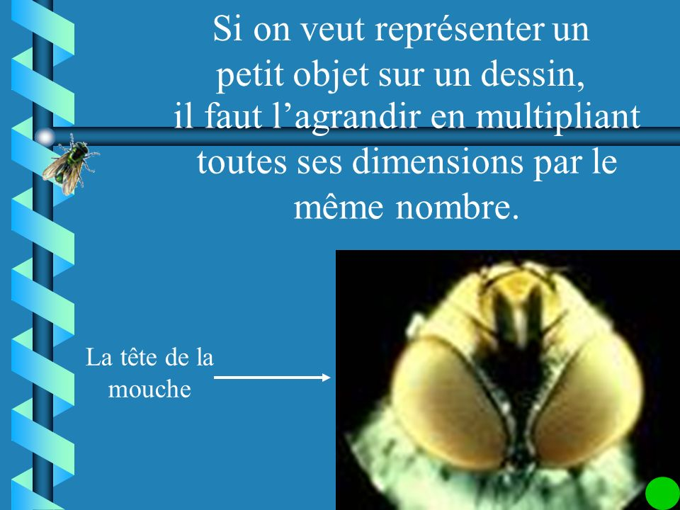 Lœil de la mouche Le photographe a fait un zoom sur lœil de la mouche, ceci correspond a un agrandissement. Observe