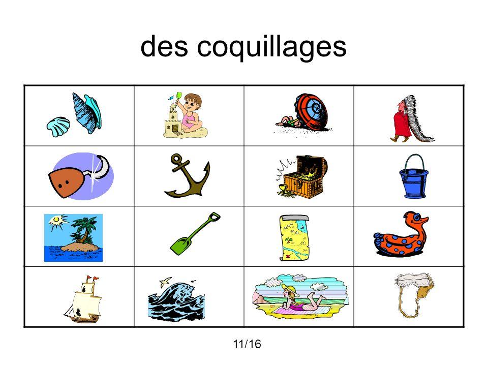 des coquillages 11/16