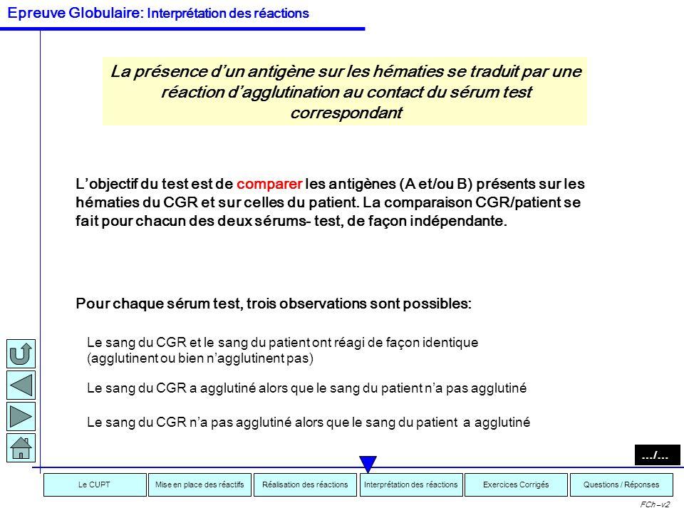Interprétation des réactionsRéalisation des réactionsMise en place des réactifsExercices CorrigésLe CUPTQuestions / Réponses FCh –v2 Lépreuve Globulai