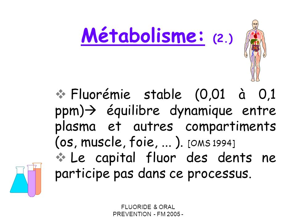FLUORIDE & ORAL PREVENTION - FM 2005 - Fluorémie stable (0,01 à 0,1 ppm) équilibre dynamique entre plasma et autres compartiments (os, muscle, foie,...