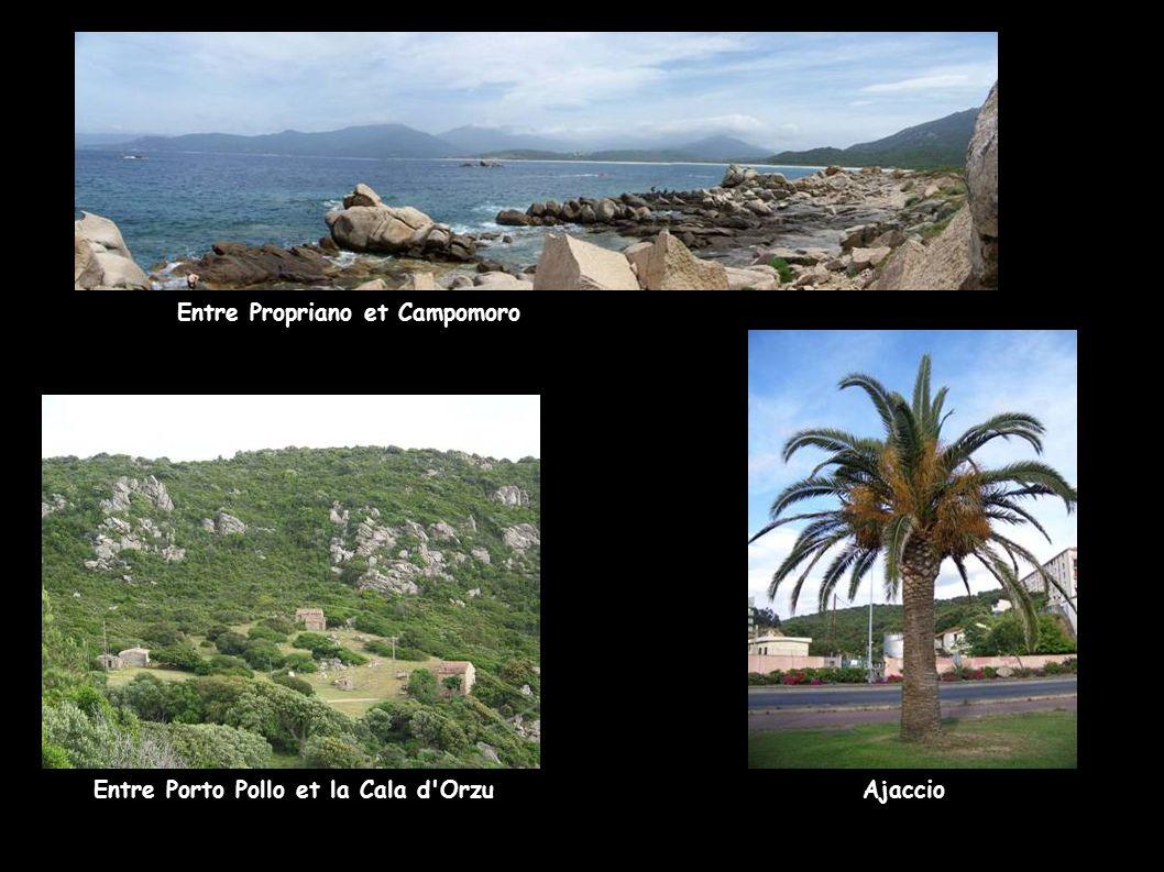 Entre Propriano et Campomoro Entre Porto Pollo et la Cala d'OrzuAjaccio