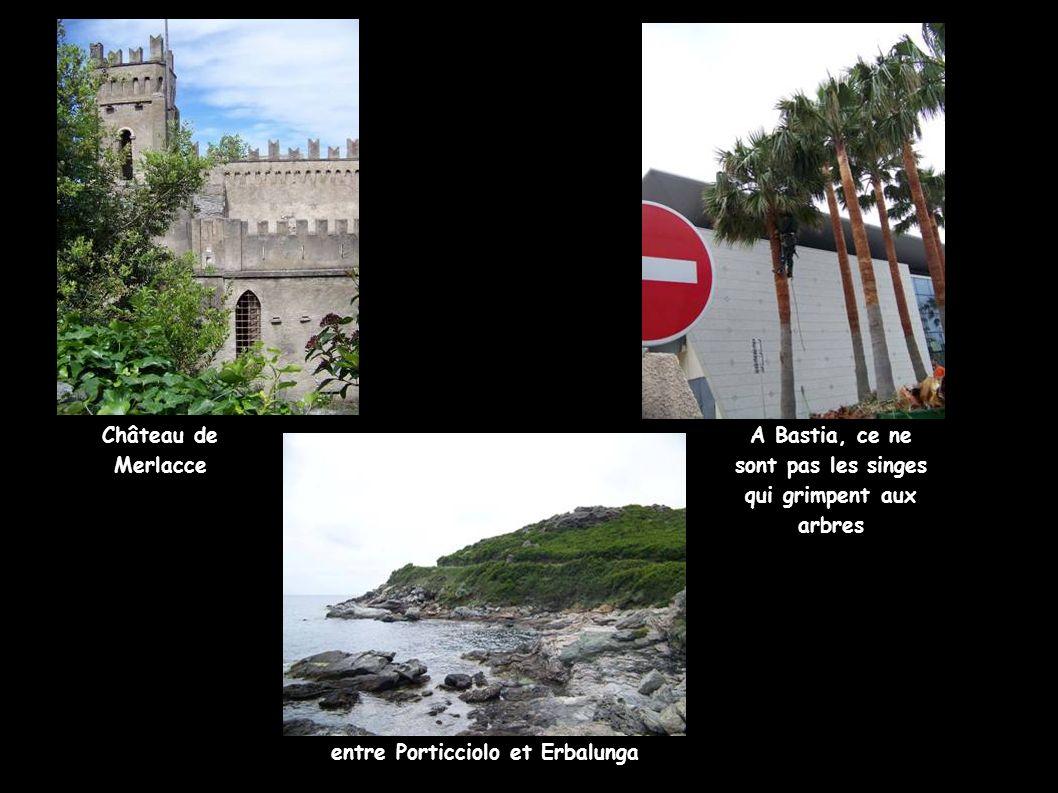 A Bastia, ce ne sont pas les singes qui grimpent aux arbres Château de Merlacce entre Porticciolo et Erbalunga