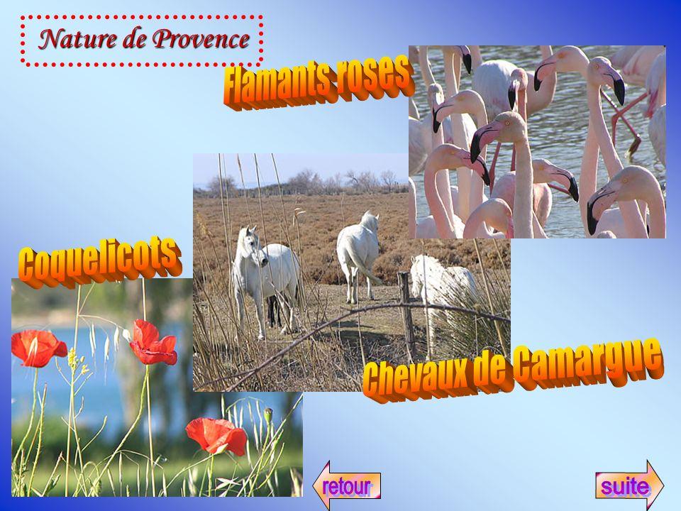 Nature de Provence