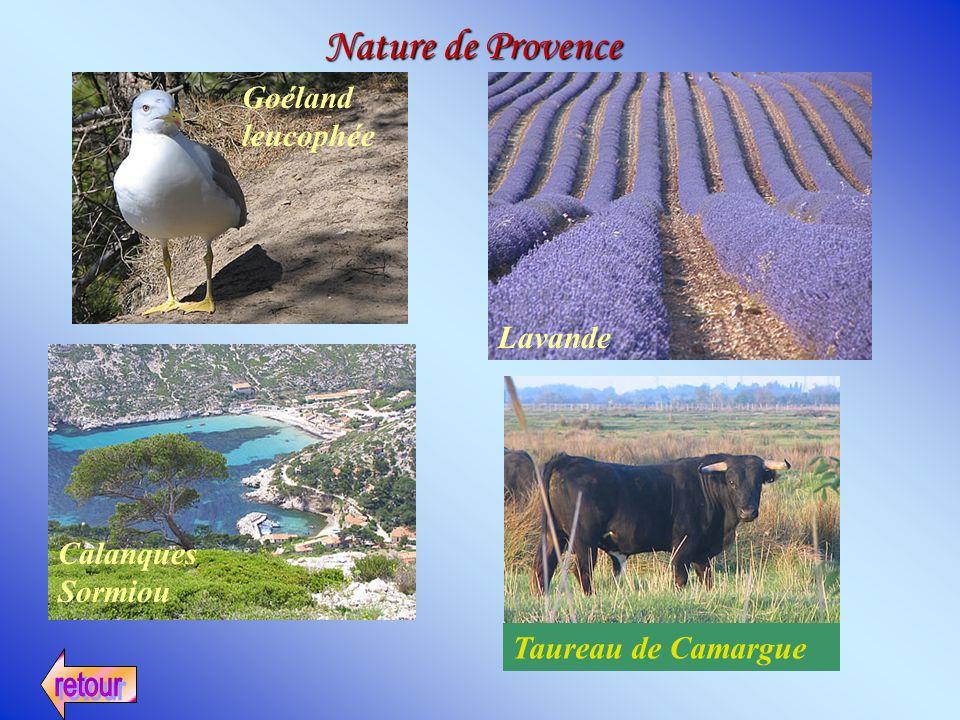 Goéland leucophée Calanques Sormiou Lavande Taureau de Camargue