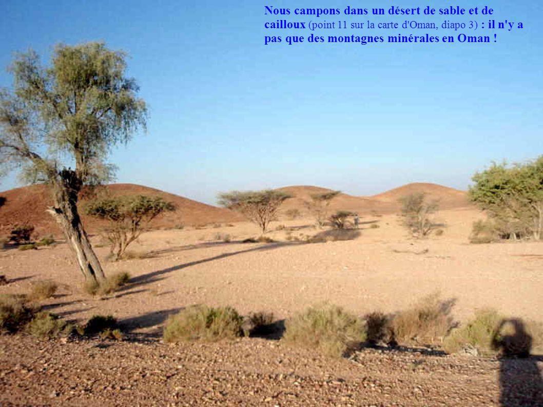 Nous campons dans un désert de sable et de cailloux (point 11 sur la carte d'Oman, diapo 3) : il n'y a pas que des montagnes minérales en Oman !