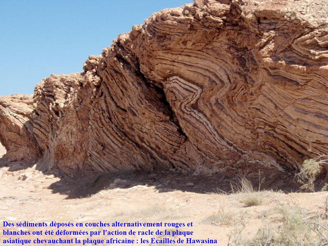 Des sédiments déposés en couches alternativement rouges et blanches ont été déformées par l action de racle de la plaque asiatique chevauchant la plaque africaine : les Ecailles de Hawasina
