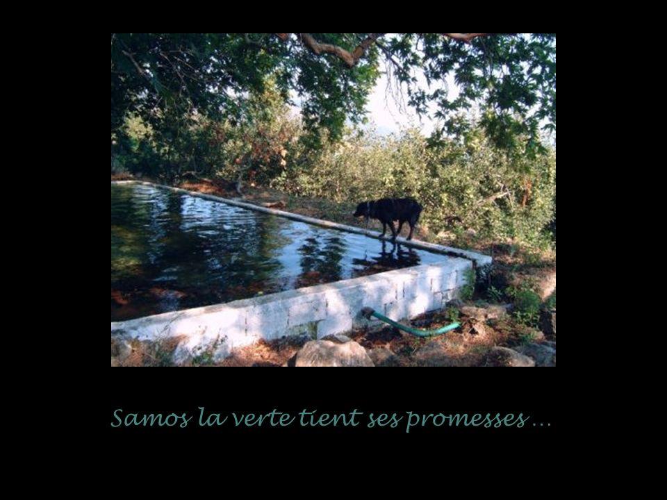 Samos la verte tient ses promesses …