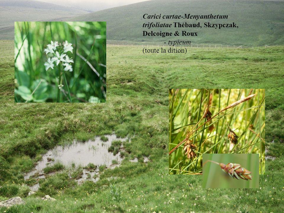 Caricetum rostratae Rübel 1912 ex Osvald 1923 veronicetosum scutellatae subass. nov. (Livradois et Pilat) Carici curtae-Menyanthetum trifoliatae Théba