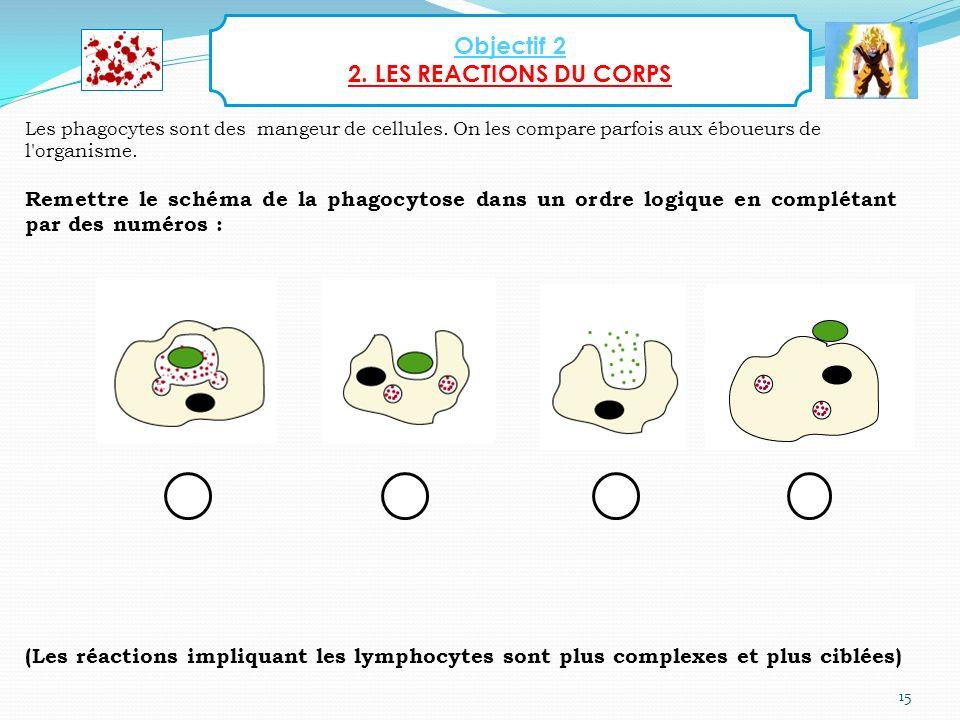 15 Les phagocytes sont des mangeur de cellules. On les compare parfois aux éboueurs de l'organisme. Remettre le schéma de la phagocytose dans un ordre